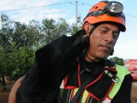 MORTO TOMMY, il cane che salvò tre vite sotto le macerie del sisma de L'Aquila